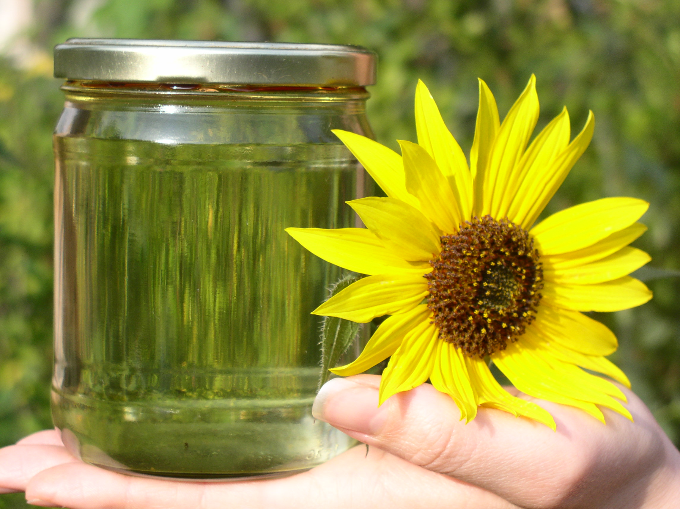biodiesel-with-sunflowers